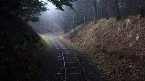 train track in a forest